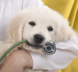 epilepsie-chien-veterinaire