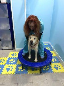 rehabilitacion mascotas