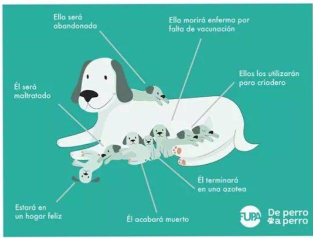 clinica veterinaria en arroyomolinos